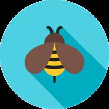 5655 - Bee